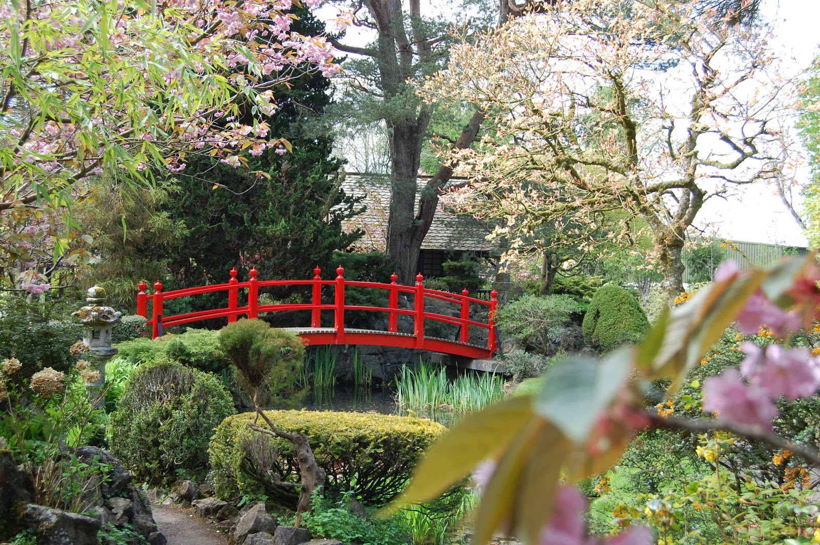 Japanese Cherry Blossom Garden Www Pixshark Com Images Galleries With A Bite