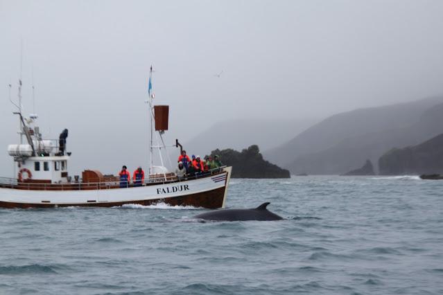 Whale watching ad Husavik-Islanda