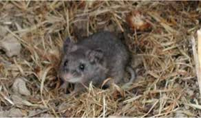 The full information about what is Hantavirus ? Hantavirus symptoms, prevention and treatment.