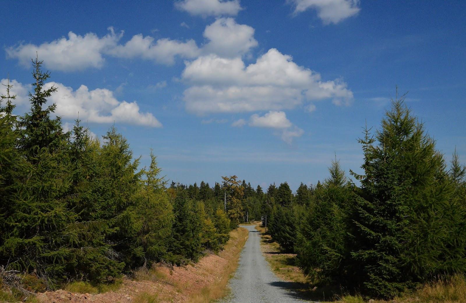 Szlak na Jagodną  Góry Bystrzyckie