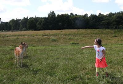 Hunsrück Wildpark Rheinböllen, Hirsche füttern
