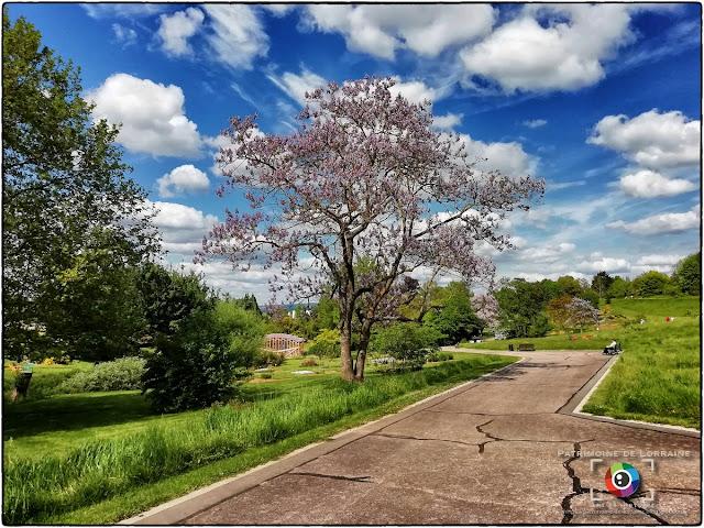 VILLERS-LES-NANCY (54) - Un dimanche de mai au Jardin botanique J.M Pelt