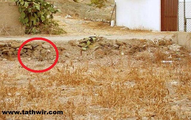 قط مموه حيوان مموه
