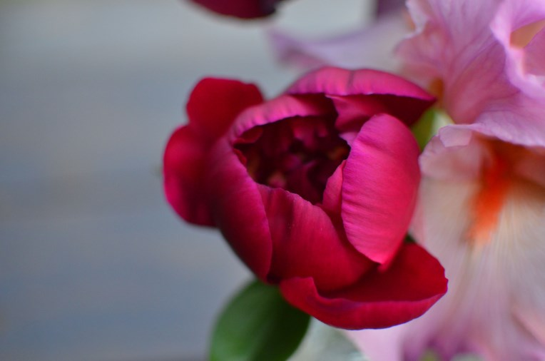 """Growing Dividing Transplanting Peonies by Amy Renea of """"Crafting With Nature"""" and """"A Nest for All Seasons"""""""