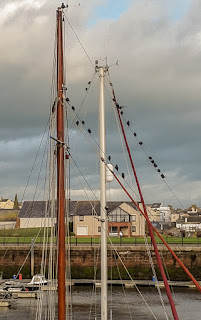 Photo of starlings on rigging