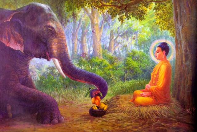 Đạo Phật Nguyên Thủy - Đường Xưa Mây Trắng - Chương 47: Cứ theo chánh pháp mà hành trì