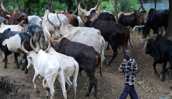 FG to build Ranches, Grazing Reserves for Herdsmen