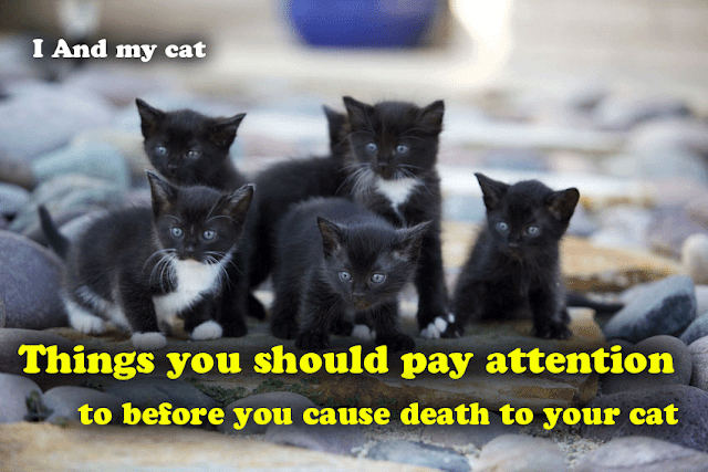 See how you can breed small cats