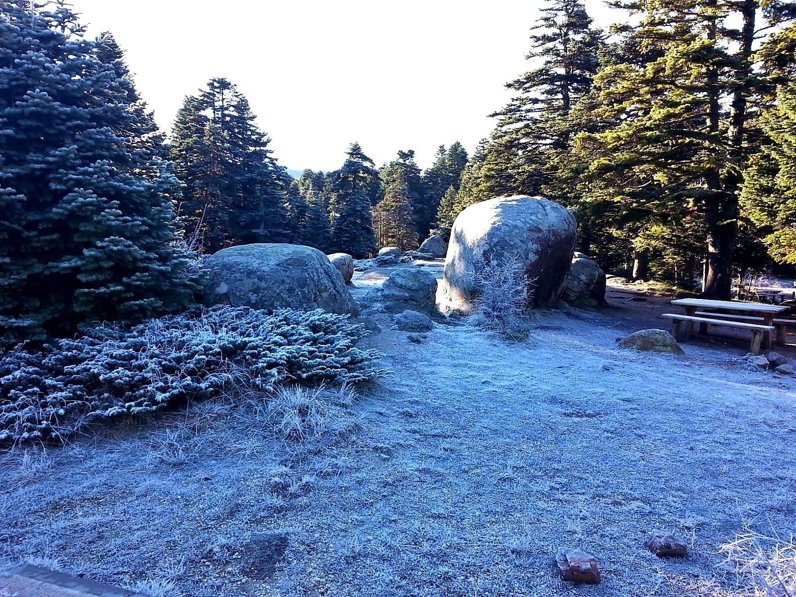Light Snowfall, Pine Tree Forest, Rocks