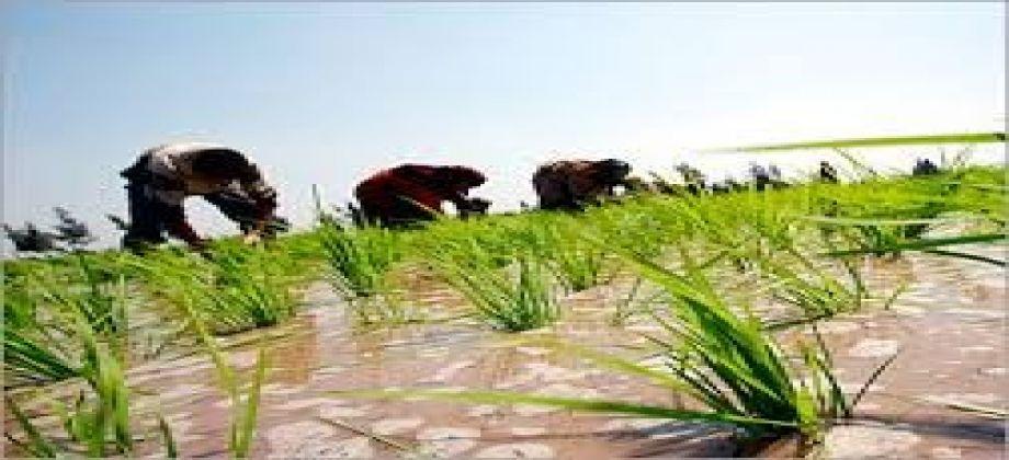 تعرف على توقعات سعر الأرز خلال الفترة القادمة