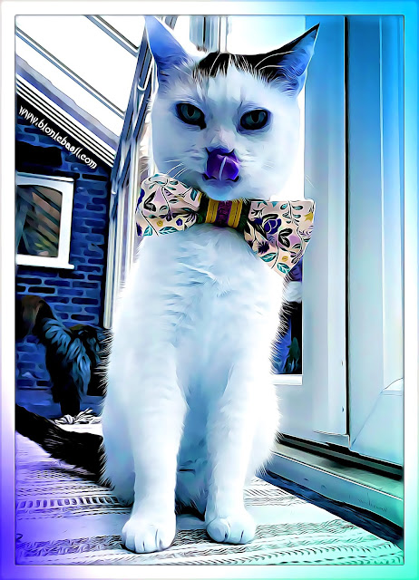 Smooch's Funny Selfie - Can Mew Stick Your Tongue Out And Touch Your Nose ©BionicBasil® Caturday Art Hop a