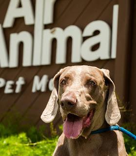 Pet Travel News - Air Animal Pet Movers