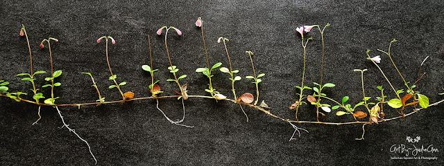 Botanical Photography Prints