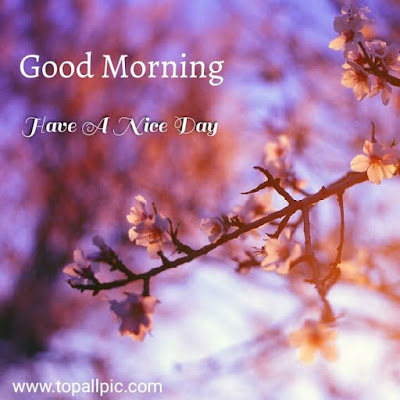 good morning flowers pictures for whatsapp