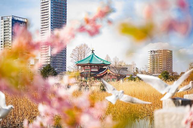 桜,鳥,上野,前ボケ
