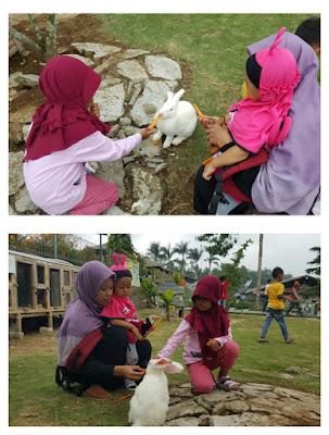 Wisata Memberi makan kelinci di Wonoland