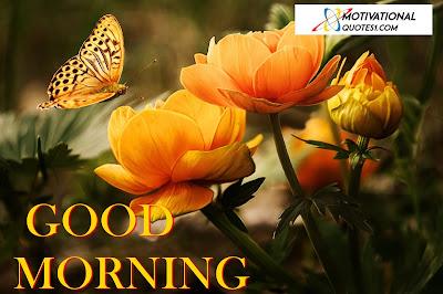 Good Morning Flowers, Morning Flowers,
