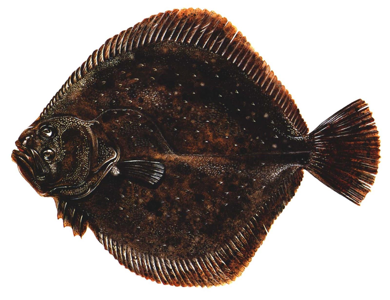 Роман федорцов фото рыб создаёт такую