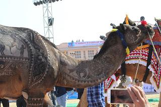 pushkar fair,camel cometition,rajasthan tourism,rtdc,