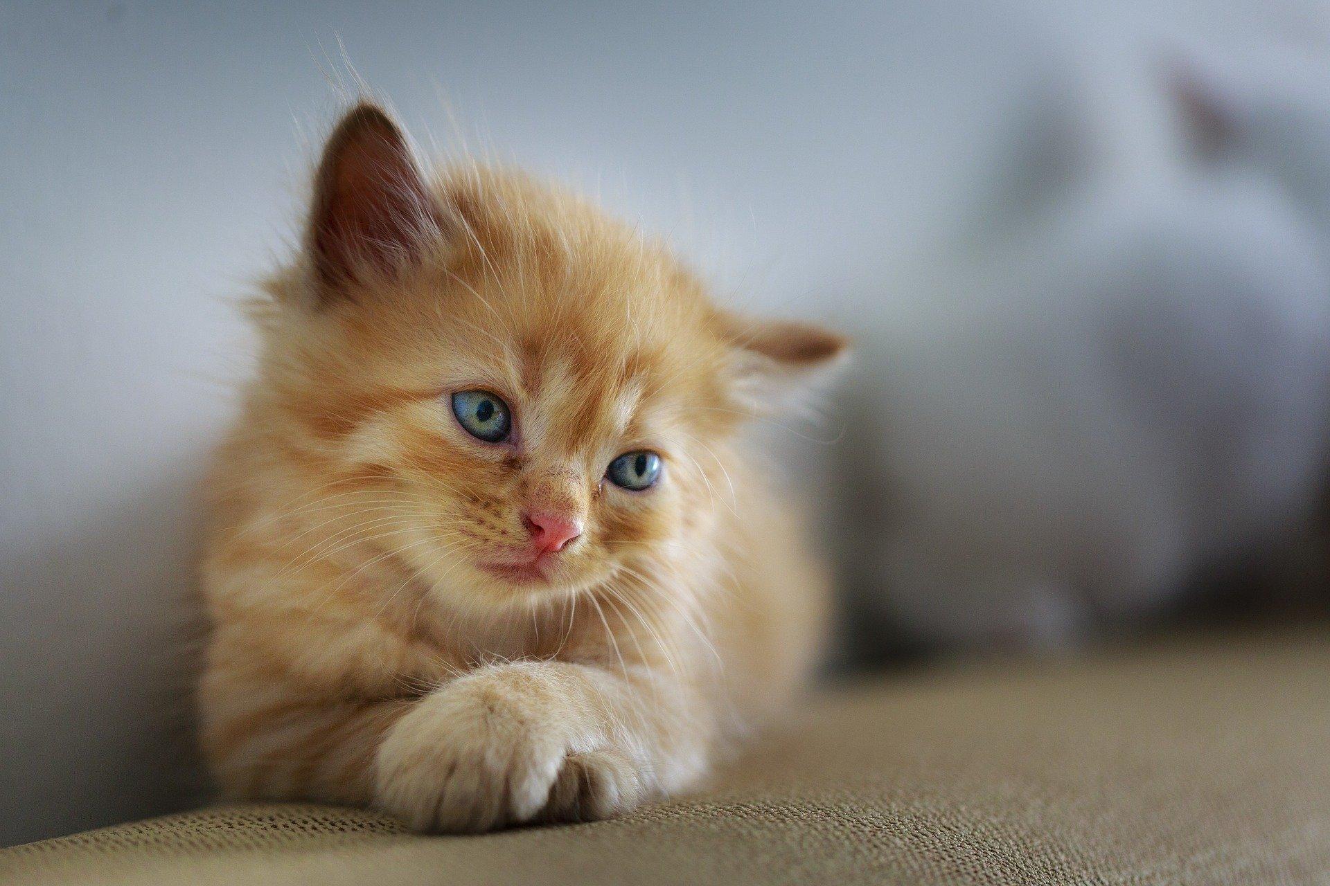 Un petit chaton mignon