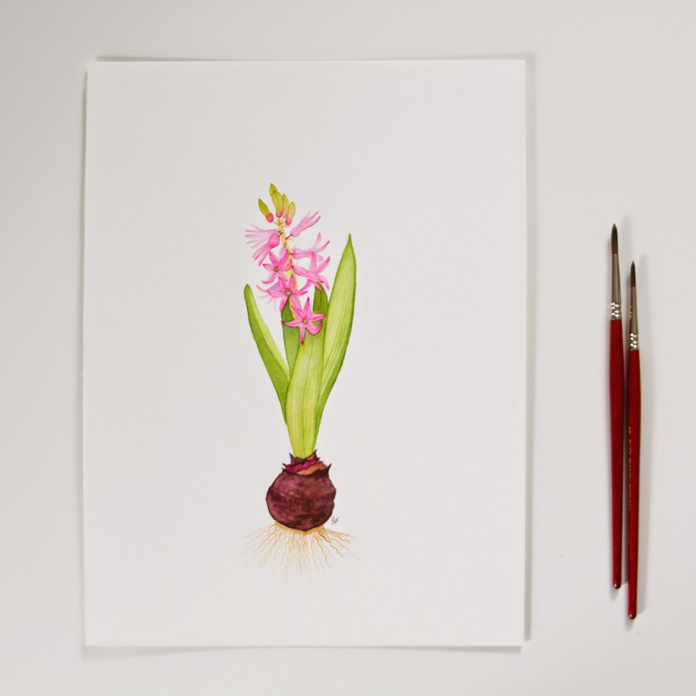 watercolor hyacinth painting