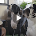 He's telling his dogs they can't have a piece of his sandwhich…. Now Watch How they respond!