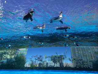 空飛ぶペンギンに会いたくて♪  ☆サンシャイン水族館☆