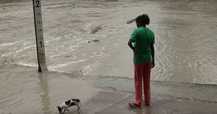 The three Crocs are wandering near the shore where the woman and her dog is located.