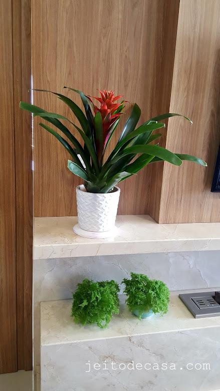 Plantas-de-interiores