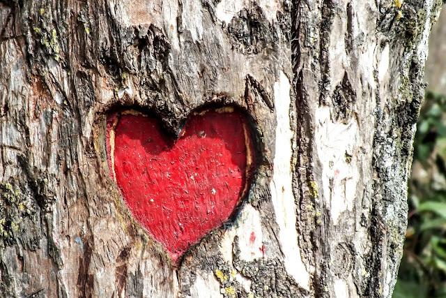 Heart Engraved Tree Trunk | Photo by Chandan Chaurasia via Unsplash