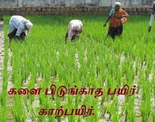 விவசாய பழமொழிகள் - Agricultural proverbs.