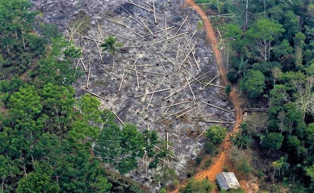 Forest Fires Destroy Amazon Rainforest