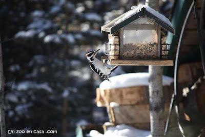 http://www.birdingcatalunya.com/2017/07/menjadors-per-ocells.html