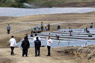 Presiden Jokowi Tinjau Kawasan Food Estate di Humbahas, Gubernur: Kalau Ini Jadi, Baru Memenuhi Komoditas