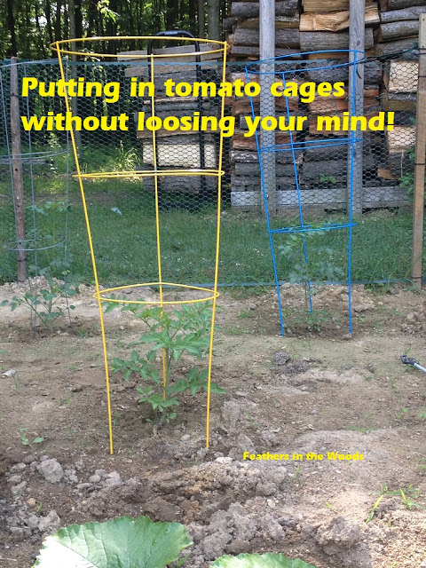 using tomato cages in the garden