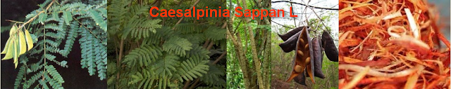 Herbal Medicine use Caesalpinia sappan