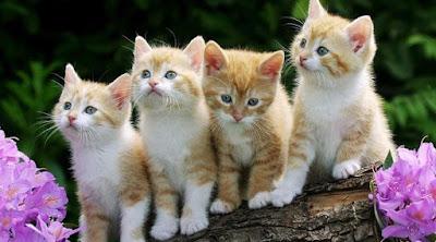 Kisah Wanita Masuk Neraka Gara-Gara Seekor Kucing