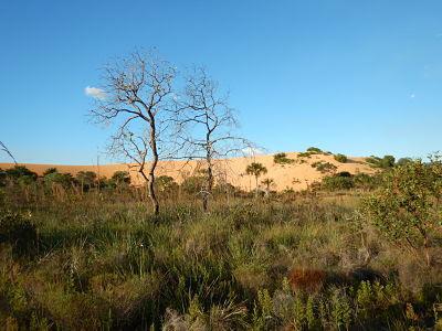 Jalapão - Flora do cerrado