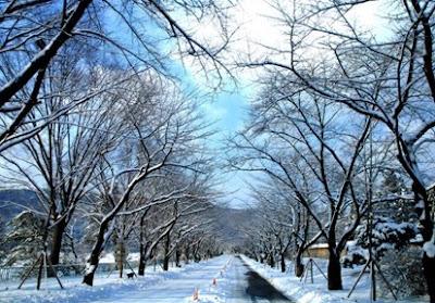 Musim Salju di Korea