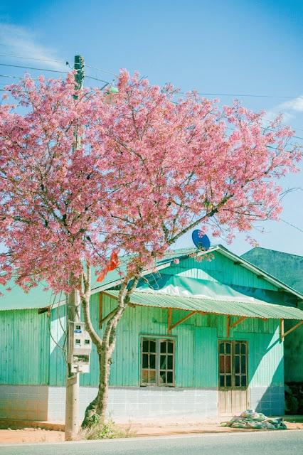 Chiêm ngưỡng vẻ đẹp tuyệt trần của vùng ngoại ô Đà Lạt 17