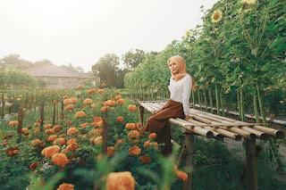 Wisata Kebun Bunga Matahari Rempoah Banyumas