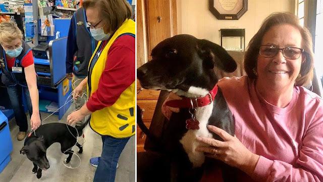 Потерявшийся пес неделями искал хозяйку и нашел в магазине