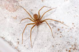University of Michigan library closed after venomous spiders found