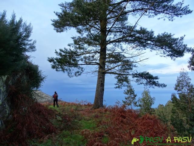 Ruta al Pico Gobia y La Forquita: Camino y pino al Forquita