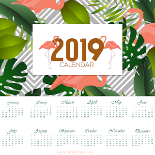 calendar 2019  flamingo Birds images