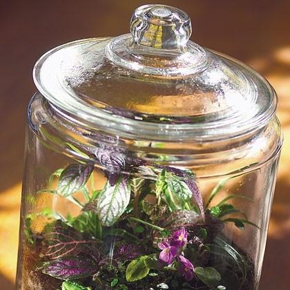 Rainforest in a Jar