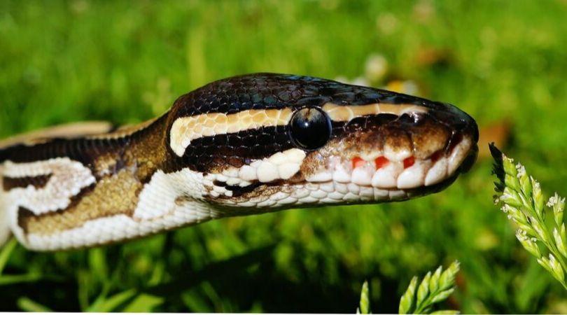 Arti mimpi digigit ular menurut islam