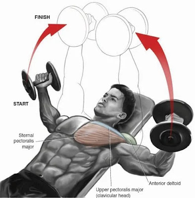 Incline Barbell Press and Incline Dumbbell Fly