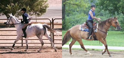 English and Western riding lessons
