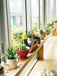 Home plants that useful for both decoration and Medicine also